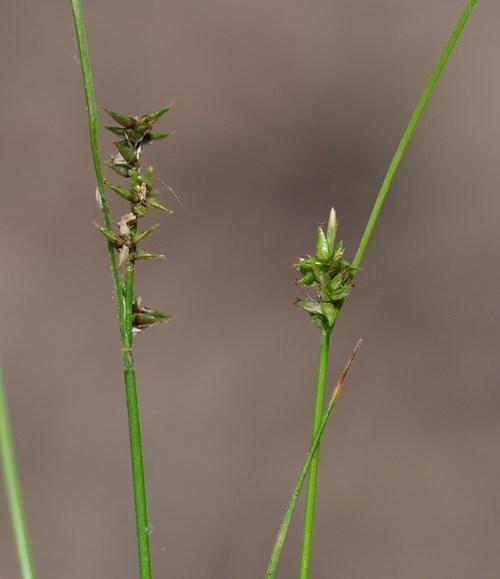 Plants Of Louisiana